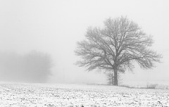 Snowy Field (Wits End Photography) Tags: trees winter season nature minimal fog monochrome weather field snow bw bare black blackwhite blackandwhite cold damp drizzle foggy freeze frost gray grey haze haziness icy landscape minimalism mist outdoor plant rain simple tree uncluttered white