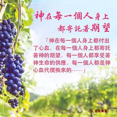 生命格言-神在每一个人身上都寄托着期望 (追逐晨星) Tags: 生命格言 格言图片 福音卡片 葡萄 天空 葡萄树