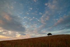 Træ med skyer (Jakob Arnholtz) Tags: clouds skyer nature natur serene evening aften still arnholtz stille