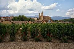 Elciego, Northern Spain (Tom Willett) Tags: wine rioja spain bodega bodegas marquesderiscal logrono elciego winery vineyard