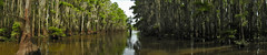 Uncertain - Canal Panorama (Drriss & Marrionn) Tags: uncertain uncertaintx texas usa outdoor landscape landscapes caddolake water tree cypresstree reflection green tillandsiausneoides spanishmoss forest woods river canals pano panorama lake