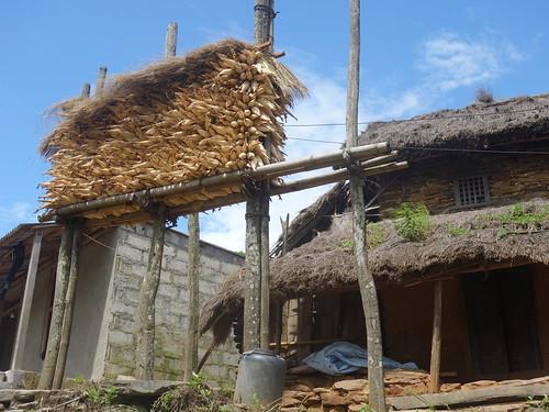 Le maïs planté dans les champs alentours a été récolté il y a peu. Les habitants le font sécher devant leurs maisons.