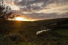 Spotlit Tree at  Landacre (tog@goldenhour) Tags: sunset landacrebridge exmoor nationalpark uk toggoldenhour spotlittree sonya7r goldenhourchallenge