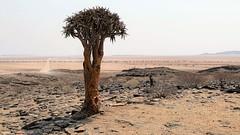 im Dunst der Mittagshitze (marionkaminski) Tags: namibia afrika africa paisaje paysage landscape tree arbol arbre panasonic lumixfz1000