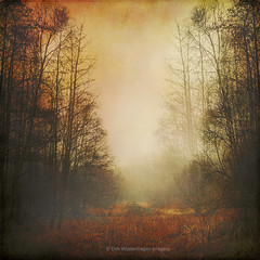 fall meadow in mist (Dyrk.Wyst) Tags: 2016 deutschland germany stimmung winter wuppertal fog forest landscape mood nature outdoor woodland retro rust mist baretrees grass orange red textures fall autumn painterly society6 redbubblelicencerf fineartamerica