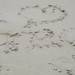 My uncle's name on Tortuga Bay Beach who died that weel