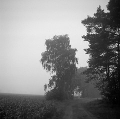 Exit (Rosenthal Photography) Tags: ff120 asa125 nebel landschaft 6x6 agfaclicki bäume pflanzen mittelformat rodinal15020°c15min weg ilfordfp4 bw feld schwarzweissbnw 20180604 analog landscape fog mist summer forest path pathway track trail trees blackandwhite agfa click click1 meniscus 725mm f88 ilford fp4 fp4plus rodinal 150 epson v800