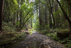 Redwood paradise [IV] (Olivier So) Tags: usa california marincounty muirwoods goldengatenationalrecreationarea woods redwoods tree nature bayarea sequoia