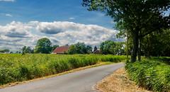 Zissenhausen, ländliche Idylle (antje whv) Tags: zissenhausen norddeutschland northgermany landwirtschaft landschaft bäume trees landscape agriculture wolken clouds strase street