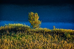 tree (Zanahr) Tags: tree landscape water nature nikon place explore texture terrain