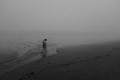Walk in the fog (Papaye_verte) Tags: couple marche beach fog plage brouillard walk york maine étatsunis