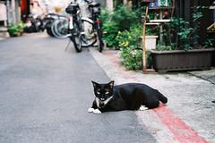 CNV000030 (雅布 重) Tags: taipei nikon f100 nikkor 50mm f14d agfa vista 200 film taiwan 2018 street cat
