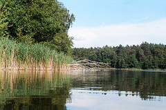 Anxiety (Tamar Burduli) Tags: analog film color 35mm landscape nature lake waterscape forest trees treeporn grass tree sky clouds travel trip poland tamarburduli kodak zenit