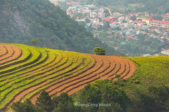 _Y2U1896.0518.Phiêng Ban.Bắc Yên.Sơn La. (hoanglongphoto) Tags: asia asian vietnam northvietnam northwestvietnam landscape scenery terraces terraced terracedlandscape hill hillside tree treehill dale town bacyentown homes buildingconstruction canon canoneos1dx canonef70200mmf28lisiiusmlens tâybắc sơnla bắcyên thịtrấnbắcyên phiêngban phongcảnh ruộngbậcthang ruộngbậcthangsơnla ruộngbậcthangbắcyên thunglũng ngọnđồi đồicây thựcvật terracedfields terracedfieldsintaxua terracedfieldsinvietnam curve curves đườngcong