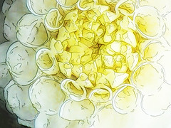Fine Details (Steve Taylor (Photography)) Tags: digitalart white yellow newzealand nz southisland canterbury christchurch northnewbrighton lines texture flower petals dahlia