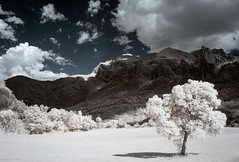 Tilt (Lolo_) Tags: ir infrared 715nm posterle pellafol isère france arbre montagne rhônealpes crète combedeschèvres souloise