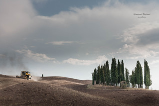 Cypresses|San Quirico d'Orcia|Italy