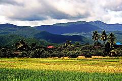 "Chiang Mai Province. (ol'pete) Tags: สิงหาคม august เชียงใหม่ chiangmai ชนบท countryside จอมทอง chomtong ดอยหล่อ ภูเขา เขา hills rural ฝน rain ประเทศไทย thailand เมืองไทย ""canoneos350d"" ""efs1855mm"" earthasia อากาด weather"