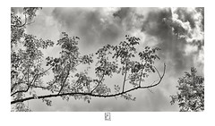 Eternal (krishartsphotography) Tags: krishnansrinivasan krishnan srinivasan krish arts photography monochrome fineart fine art tree branch branches leaves leaf clouds sky rays light affinity photo padalur trichy tamilnadu india