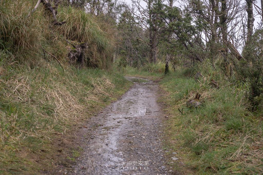 太平山翠峰湖環山步道 |走在泥濘的道路上,只為途中美景 | 宜蘭大同鄉24