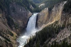 The Lower Falls (Bill in DC) Tags: wy wyoming yellowstonenationalpark 2018 grandcanyonoftheyellowstone