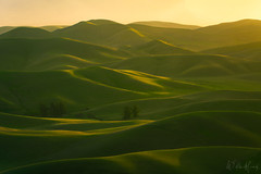 Boundless (Willie Huang Photo) Tags: rollinghills rolling hills green spring california light shadow landscape scenic nature