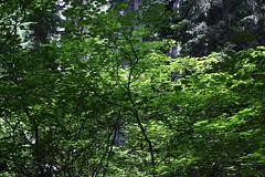 Tidbits Mountain-012 (rozoneill) Tags: tid bits mountain mckenzie river blue lake willamette national forest hiking oregon