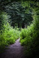 IMG_4474 (Alexander Malyshev) Tags: canon carpathians ukraine forest nature woods mounts