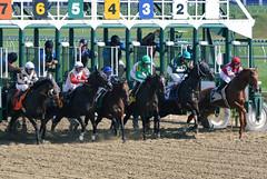 "2016-10-16 (4) r2 and they're off (JLeeFleenor) Tags: photos photography md maryland marylandhorseracing marylandracing laurelpark jockey جُوكِي ""赛马骑师"" jinete ""競馬騎手"" dżokej jocheu คนขี่ม้าแข่ง jóquei žokej kilparatsastaja rennreiter fantino ""경마 기수"" жокей jokey người horses thoroughbreds equine equestrian cheval cavalo cavallo cavall caballo pferd paard perd hevonen hest hestur cal kon konj beygir capall ceffyl cuddy yarraman faras alogo soos kuda uma pfeerd koin حصان кон 马 häst άλογο סוס घोड़ा 馬 koń лошадь outdoors outside"