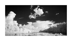 Labor Day Bridge (DRCPhoto) Tags: irconverteddslr canon5d digitalinfrared sigma1224mmdghsm cheatriver albright westvirginia