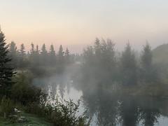 Series: Frosty, foggy dawn on Bluebird Estates (+4) (peggyhr) Tags: peggyhr img6278 frosty foggy lake trees bluebirdestates alberta canada thegalaxy thegalaxystars thegalaxyhalloffame thegalaxylevel2 carolinasfarmfriends rainbowofnaturelevel1red