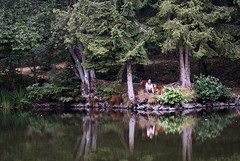(Oliver Zimmermann) Tags: animal animalthemes beautyinnature day forest growth lake land mammal nature oneperson outdoors plant realpeople reflection scenicsnature tranquility tree vertebrate water waterfront women