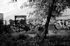 (赤いミルク) Tags: コントラスト blackandwhite monochrome ビンテージ ビニル black romantism gothic 赤 red ウォール wall ゴースト 悪魔 ghost 友人 ドア doors 贈り物 地平線 horizon モノクローム 暗い street 壁 surreal intriguing 生活 life door texture 秋 雨 overpast 賞賛 光 影 白黒 幽霊 いかだ ダンス road