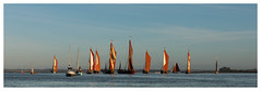 294A4509-Edit.jpg (merseamillsy) Tags: smack thamesbarge oystersmack barge colnebargematch sailing