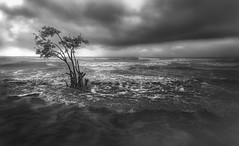 Alone .. (tchakladerphotography) Tags: henrysisland blackwhite bw atmosphere tree sea ocean waves drama clouds rain water light nature sky seascape