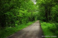 20 May 2018:  Flowers line the path (RobinMSP) Tags: may2018c dailywalk spring nature flowers wildflowers trails path richlandbotrail mansfieldohio ohio