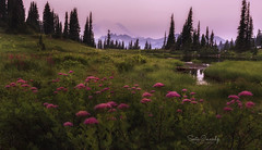 Smoky Sunrise in the Mountains. (Mt Rainier NP, Chinook Pass, WA). (Sveta Imnadze) Tags: nature beautiful mtrainier mtrainiernp wa sunrise smoke wildflowers lake tipsoolake