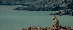 Día ventoso (José L.Gutiérrez) Tags: nikon d7100 nature naturaleza fisheye reflex mirror landscape paisaje 10mm atacama chile desierto desert 200mm panorama