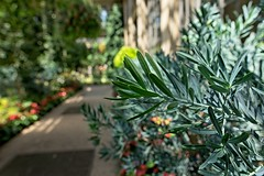 By the Path (brev99) Tags: d610 longwoodgardens pennsylvania ononesoftware on1photoraw2018 bokeh leaves path conservatory greenhouse shallowdof selectivefocus sigma2414
