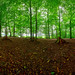 Messen Forest Selection