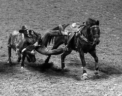 024693763735-104-Steer Wrestler Jumping Off-4-Black and White (Jim There's things half in shadow and in light) Tags: yellow blackandwhite bulldogging steerwrestling speed sports horse steer cow animal cowboy nfr nationalfinalsrodeo usaamerica lasvegasnevada thomasandmack