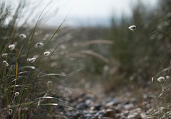 Bunny tails (V Photography and Art) Tags: pov pointofview perspective bunnytail seaside
