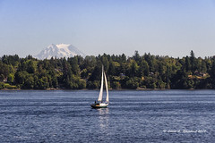 090218 Sailing on Eld Inlet 2 (wildcatlou) Tags: summer latesummer september olympia harbordays tugboats vintage pugetsound eldinlet tugboatraces water mtrainier sailboat