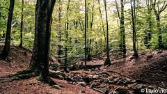 Source de la Géronster, Spa (02) (Lцdо\/іс) Tags: spa belgique belgium geronster travel tree treking forêt forest septembre september 2018 nature eifel eastbelgium walk walking color liège wallonie wallone wallonne