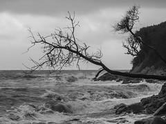Fairlight Glen (Rhisiart ap Cymru) Tags: gbr unitedkingdom england ore hastings sea clouds eastsussex monochrome waves coastline beach trees coast englishchannel horizon shore fairlight rocks branch