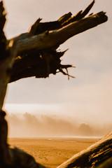 Olympic Peninsula (rsieber82) Tags: washington pnw seattle pacific northwest film 35mm kodak analog analogue travel nikonf3 rogersieber olympicpeninsula olympicnationalpark coast seastack ocean pacificcoast trail whale