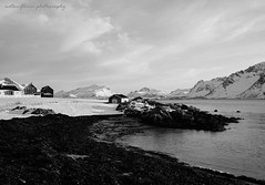 A nice day. (natureflower) Tags: nice day sea mountains houses fence seaweed landscape bw scenery monochrome