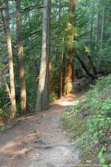2018-08-18 Whistle Lake Trail 205 (07) (680x1024) (-jon) Tags: anacortes skagitcounty skagit fidalgoisland sanjuanislands washingtonstate washington pnw pacificnorthwest salishsea pugetsound acfl anacortescommunityforestlands whistlelake lake trail path 205 nikon nikonl22 tree douglasfir fern alder summer woods forest a266122photographyproduction hiking hike walk walking