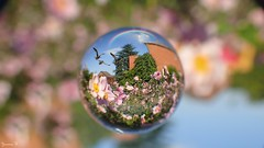#Hover - 5818 (ΨᗩSᗰIᘉᗴ HᗴᘉS +21 000 000 thx) Tags: hover flickrfriday flickerfriday friday glass macro flower flora bokeh hensyasmine namur belgium europa aaa namuroise look photo friends be wow yasminehens interest intersting eu fr greatphotographers lanamuroise tellmeastory flickering bird rainbow soratama