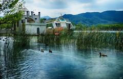 A casita (candi...) Tags: patos lago llacdebanyoles agua paisaje casa arquitectura hierba naturaleza nature airelibre sonya77 montaña arboles aves